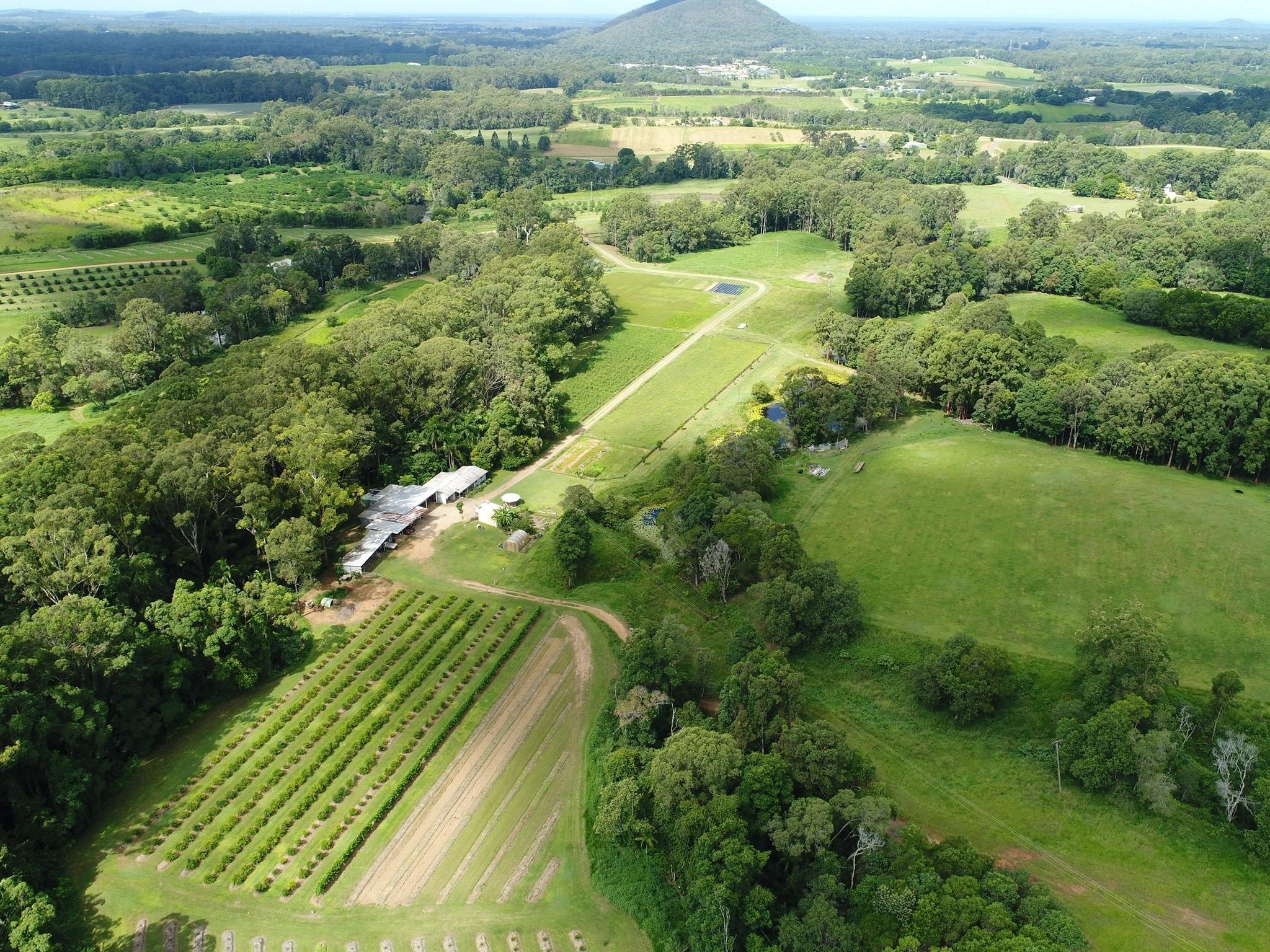 Jade King's farm